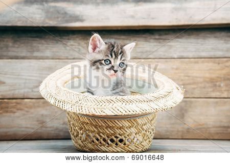 Little Kitten In The Hat