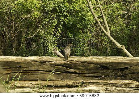 Bird On Railroad Tie