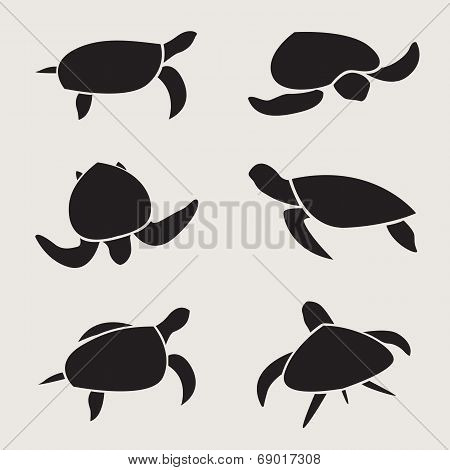 Vector Group Of Turtle