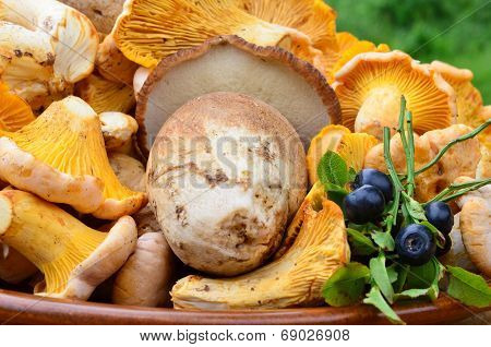 Mushrooms And Blueberries