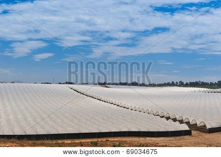 Rows Of Covered Crops In Field Under Sky
