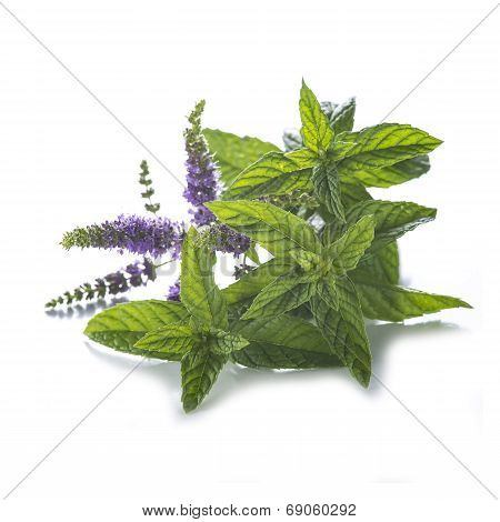 Mint Leaves And Flowers Isolated On White Background