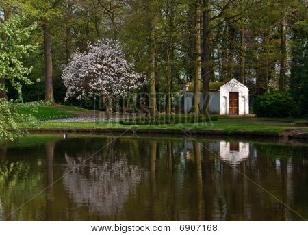 Reflection Of Blooming Magnolia Tree In The Belgian Park