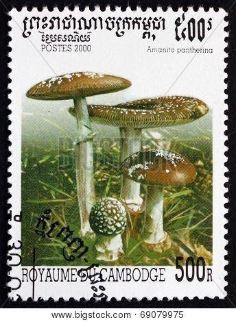 Postage Stamp Cambodia 2000 Panther Cap, Mushroom