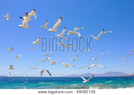 Swarm Of Flying Sea Gulls
