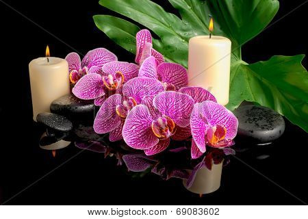 Spa Set Of Zen Stones With Drops, Blooming Twig Stripped Violet Orchid (phalaenopsis), Candles, Big