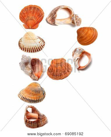 Letter P Composed Of Seashells