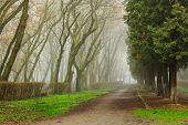 image of creepy  - The Road In Mysterious Dark a bit creepy Park shrouded in mist - JPG