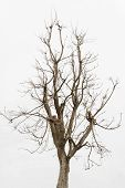 picture of dead plant  - Dead tree  - JPG