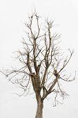 pic of dead plant  - Dead tree  - JPG