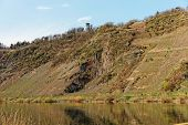 picture of moselle  - Steep vineyard slopes in Punderich - JPG