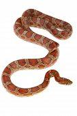 image of green whip snake  - snake - JPG
