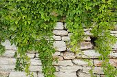 foto of greenery  - Photo of the Natural Stone Wall With Greenery - JPG