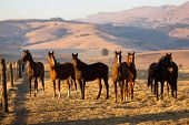 foto of herd horses  - horse herd on the pasture - JPG