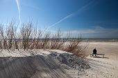 pic of pussy-willows  - A woman seats alone on the beach on bench in spring with pussy - JPG