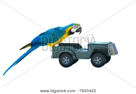Isolated Parrot On A Toy Car