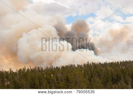 Fire Takes Hold In Yellowstone Forests
