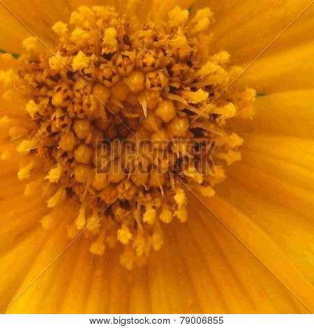 Abstract Texture Of Flower