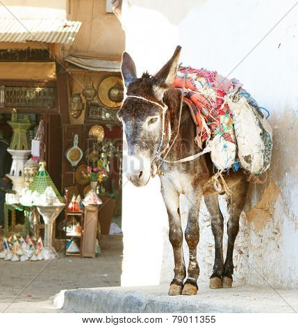 Donkey  on the street of the medina in Fez, Morocco In the background  shopping street