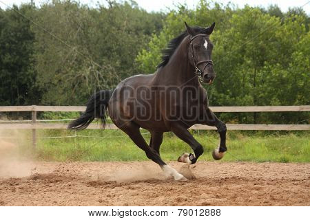 Black Horse Galloping Free At The Field