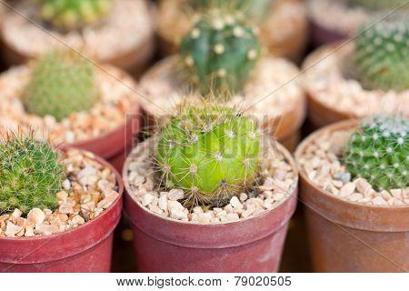 Small Cactus Plant Pot.