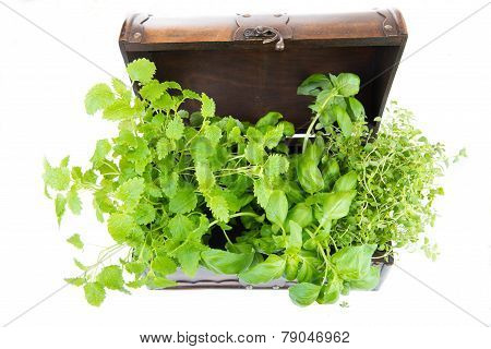 Melissa, Thyme And Basil In An Old Box
