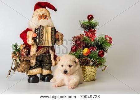 Puppy Meets New Year In Studio