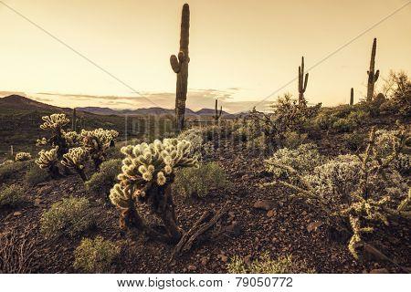 Beautiful desert scene at dusk in Phoenix, Arizona,USA