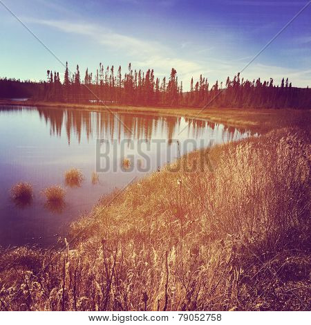Instagram Of Peaceful Lake Surrounded By Grass And Trees