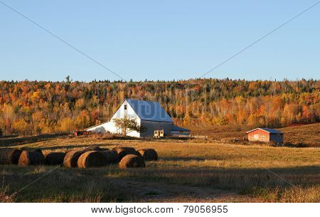 Fall Farmland