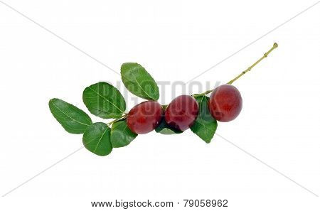 Jujube Fruit On Branch With Leaves