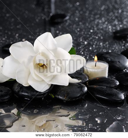 Still life with white gardenia with candle with wet pebbles