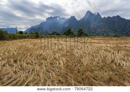 Rice field and mountians