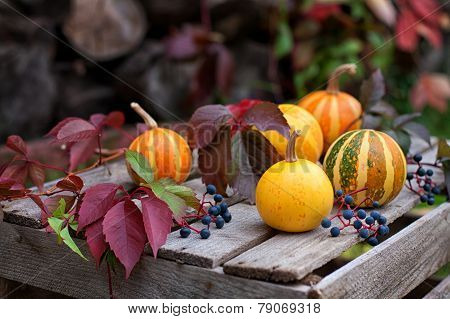 Autumn Still Life Of Pumpkins And Autumn Leaves