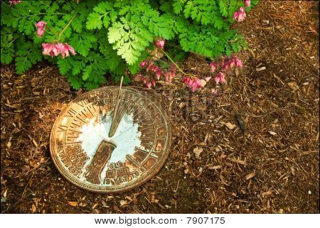 Sundial On Bark Mulch Next To Bleeding Hearts