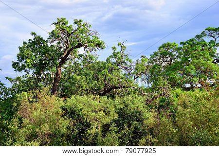 Tanzania, Manyara