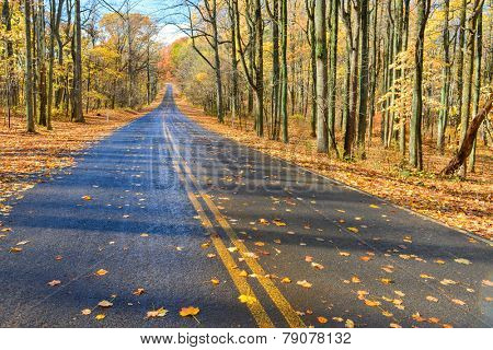Asphalt road into autumn forest - Shenandoah National Park, Virginia - USA