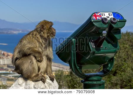 Monkey Near The Telescope On The Background Of The Bay. Gibraltar