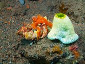 picture of hermit crab  - The surprising underwater world of the Bali basin - JPG