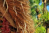 stock photo of canopy roof  - a fragment of a roof of reeds amid tropical vegetation - JPG