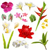 stock photo of tropical plants  - Set of isolated tropical plants leafs and flowers - JPG