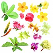 image of tropical plants  - Set of isolated tropical plants leafs and flowers - JPG
