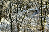 foto of luge  - trees in winter white snow on it goes away man winter - JPG
