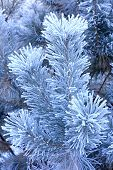 stock photo of conifers  - Winter landscape the Hoarfrost on a conifer - JPG