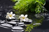 foto of gardenia  - white gardenia with green leaf and therapy stones  - JPG