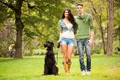 pic of schnauzer  - Young handsome heterosexual couple with a dog a black giant schnauzer enjoy a walk through the park - JPG