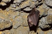 stock photo of cave  - bat hanging in the cave - JPG