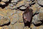 foto of bat wings  - bat hanging in the cave - JPG