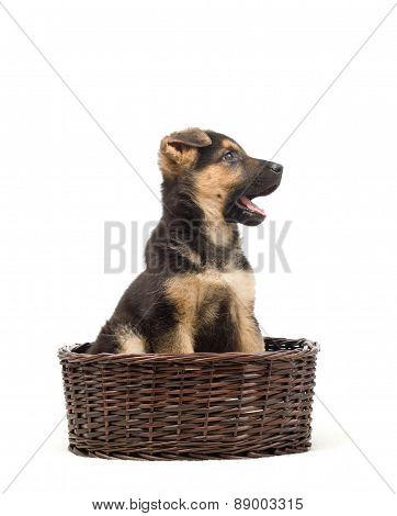 Puppy Barks