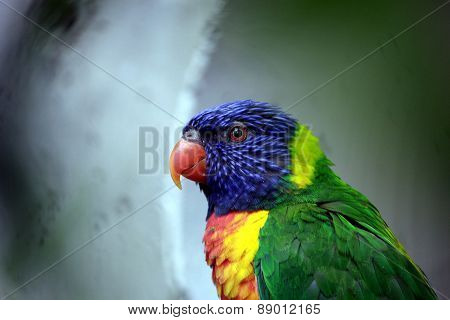 Colourfull parrot